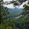 Woods around Lake Allatoona ~~ Photograph by Robert Sutherland