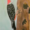 Red-bellied Woodpecker by Sophia Bobo