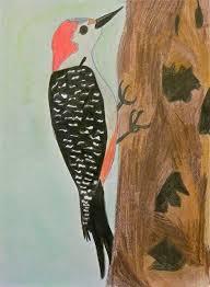 Red-bellied Woodpecker by Sophia Bobo