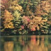 Vogel Park in Fall