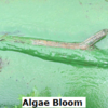 algae bloom 2