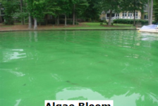 USACE Photo of Algae Bloom