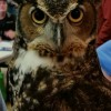 This is an owl. ~~ Photograph by Robert Sutherland