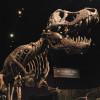 Stan the Tyrannosaurus Rex at Tellus Science Museum in Cartersville