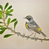 This yellow-rumped warbler drawn and painted by Decatur's Angus Pritchard won the Grand Prize.